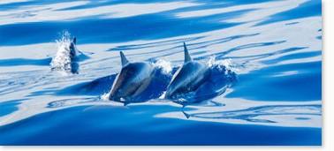 delfinschule_k