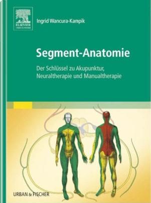 Segment-Anatomie
