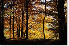 Autumn_01