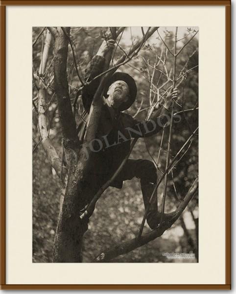 A.T. Still - Baum (A3)