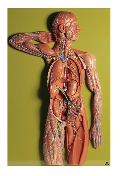 Lymphgefässsystem